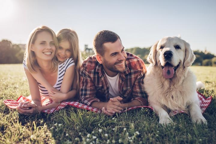 6 Steps to Adopt Adorable Golden Retriever Puppies