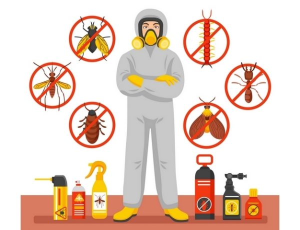 6 Biggest Warning Signs of Pest Problems