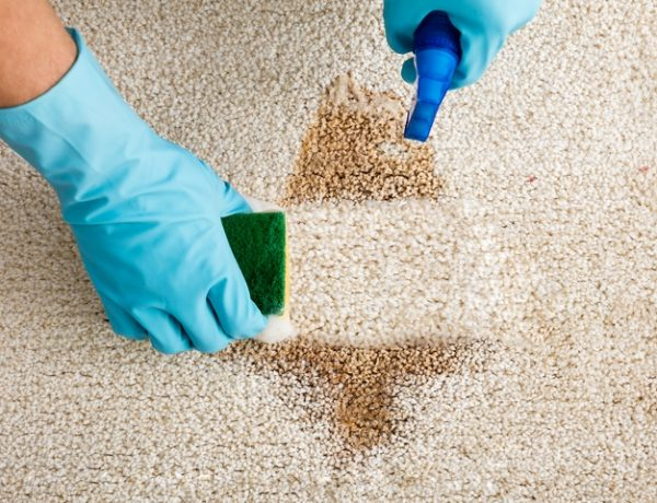 10 Ways on How to Get Wet Paint Out of Carpet