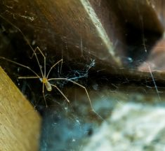 5 Ways to Check for Pests That May Be Invading Your Home
